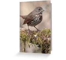 Fox Sparrow and Lichen Greeting Card