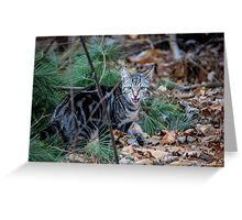 Little Wild One Greeting Card