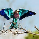 Spread Your Wings by J. Day