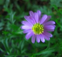 Purple Flower on Green by Donna Grayson