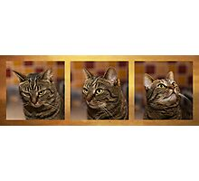 Cats mood swing Photographic Print