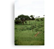 Parc Kruger - South Africa Canvas Print
