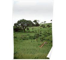 Parc Kruger - South Africa Poster