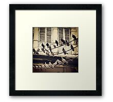 birdies Framed Print