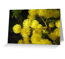 Acacia Blossom Greeting Card