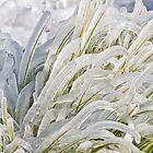 Creative Winter Landscaping by TeresaB