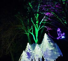 Wild Lights Flying Eagles, Woodland Park Zoo by Ian Phares