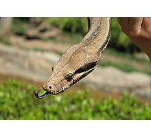 A Snake's forked tongue Photographic Print
