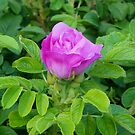 First Pink Bloom by mussermd