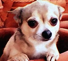 Dexter the Potted Chihuahua  by BrianJoseph