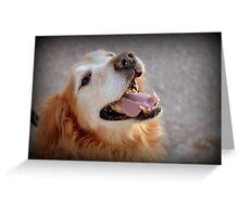 Dog Gone II Greeting Card