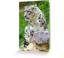 Zürich Zoo, Snow Leopard Villy Greeting Card