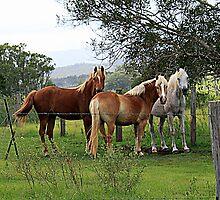 Three Horses by Jenelle  Irvine