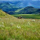 Swaziland by Boris TAIEB