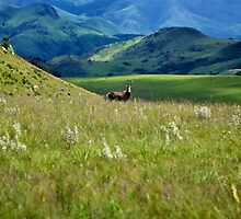 Swaziland by Boris TAIEB