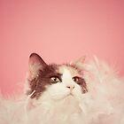 Penny Lane, Most Fabulous Kitteh by msruffles
