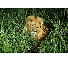 Kruger Parc - South Africa Photographic Print