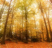 Forest in autumn by DavidCucalon