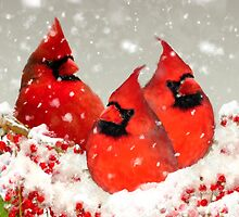 Oil Painted Cardinal Christmas Card by Moonlake