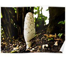 Shaggy Ink Cap Poster