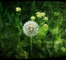 Dandelion Clock by efy1