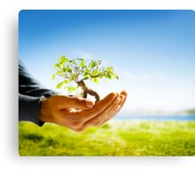 Hands holding a tree Canvas Print