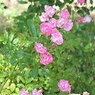 Pink flower garden by donnagrayson