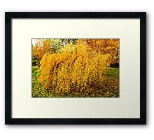 Autumn Weeping Framed Print