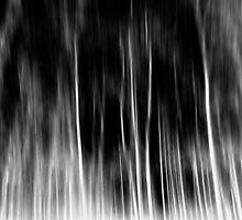 trees  by stelio