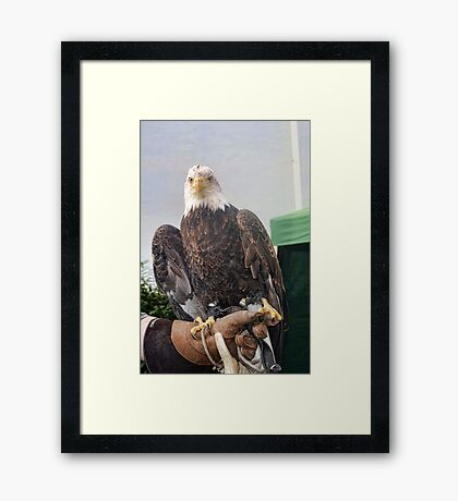 Say Hello To Baldric  Framed Print