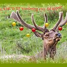 What to my wondering eye... Merry Elk by Owed to Nature