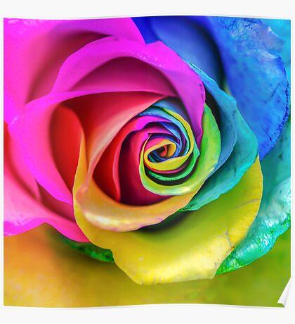 Rainbow Rose Poster