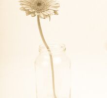 Vintage Flower by Michael Hollinshead
