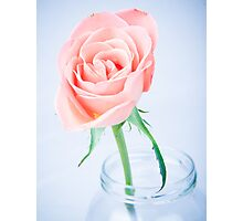 Macro Rose Photographic Print