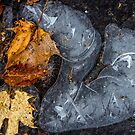 Frozen Leaf Puddle by Mikell Herrick