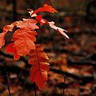 The very last leaves by jchanders