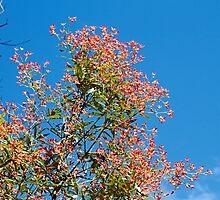 Maandowie Bush Reserve  ~  It Grows, They Live by Robert Elliott