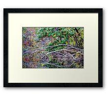 The Tree That Sandy Felled Framed Print