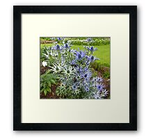 Cultivated Thistles Framed Print