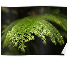 Softly Evergreen Poster