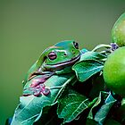 Apple Frog.... by tracielouise