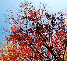 Autumn colours 3 of 3 by AntoinetteDF