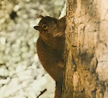 Winter Squirrel by jkartlife