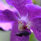 Flying orchid by mooksool