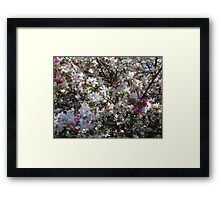 Crab Apple Spring Blossom Framed Print