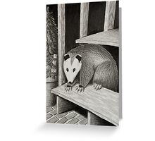 Opossum on Deck Step Greeting Card