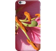 Sunlit Pink Lily in Macro iPhone Case/Skin