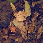 Fallen Leaves by Heather Reid