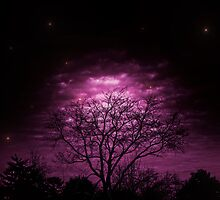 Pink Stars by Roses1973