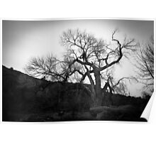 Dead Tree Cathedral Rock Poster